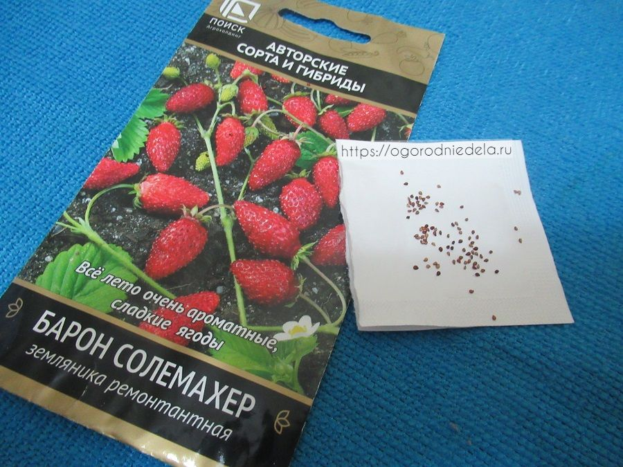 Семена садовой земляники