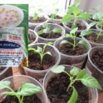 обработка семян перца на рассаду